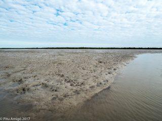La marea molt baixa converteix les badies en fanguissars. Everglades NP, Florida.
