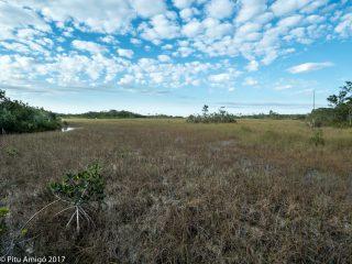 L'aigua circula molt lentament. Everglades NP, Florida.