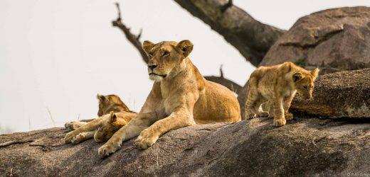 Serengeti-12