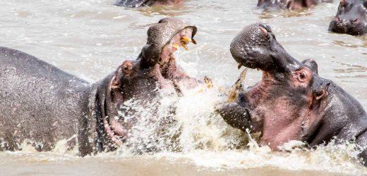 Serengeti-16