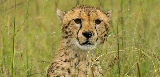 Serengeti-31