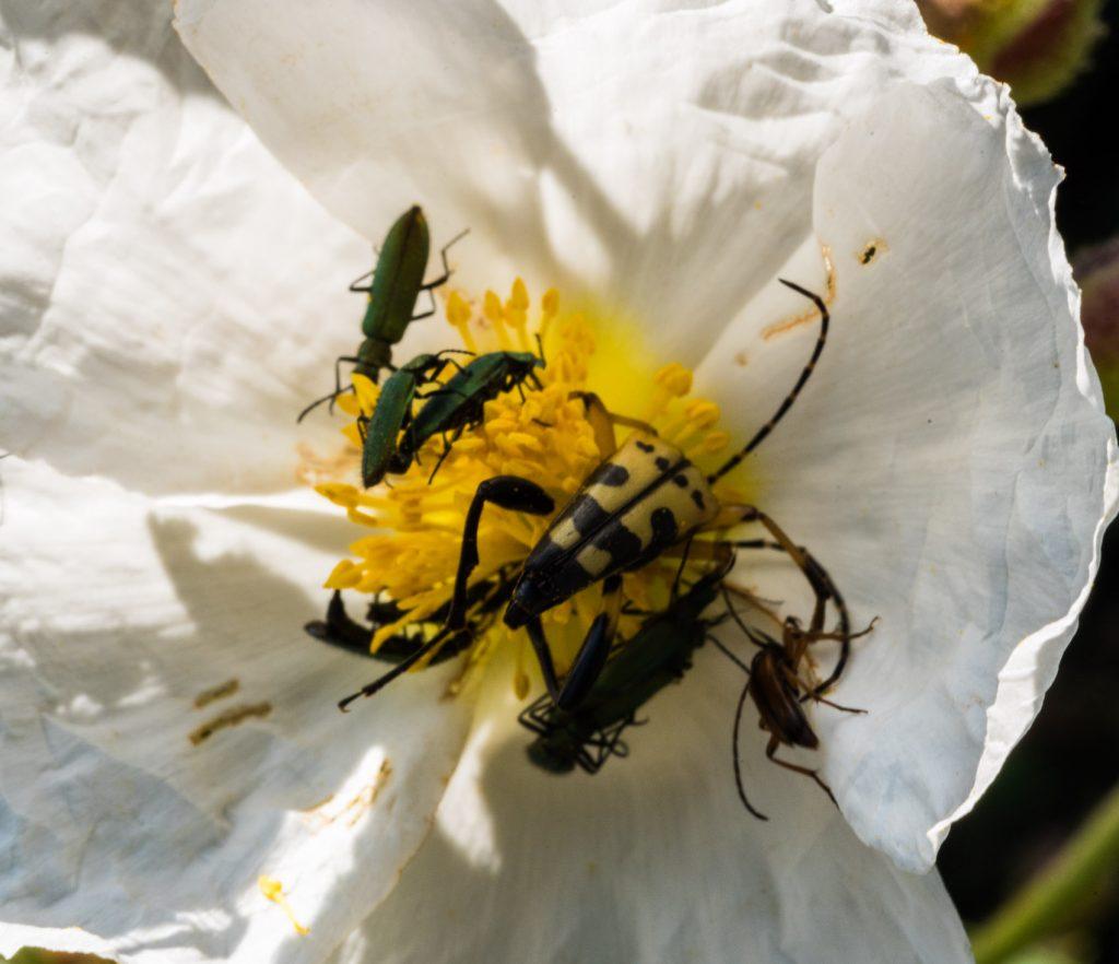 Insectes i estepa