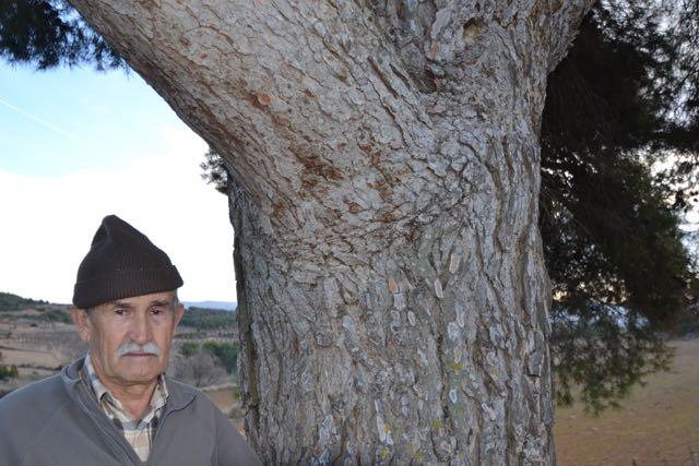 El Pi de les Fontanelles, Pinus halepensis. L'Espluga de Francolí. Arbres Singulars amb Carlos Asensio.
