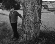 El Pi del Coll Vell, Pinus halepensis. L'Espluga de Francolí. Arbres Singulars amb Carlos Asensio.