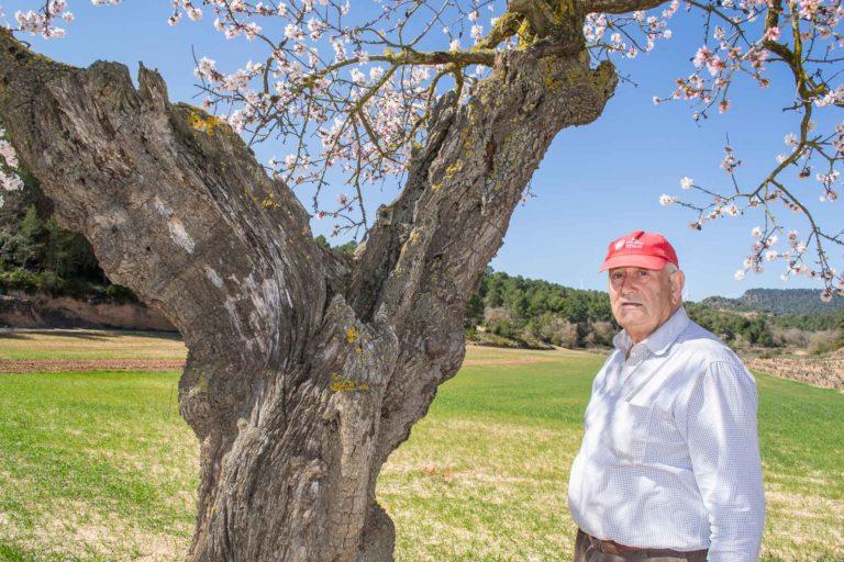 L'atmetller de l'Andreu, Prunus dulcis. L'Espluga de Francolí. Arbres Singulars amb Andreu Morgades.