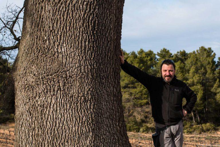 El reboll de Vinganya, Vimbodí, Quercus faginea valentinae, Arbres Singulars, amb Ramonet Amigó.