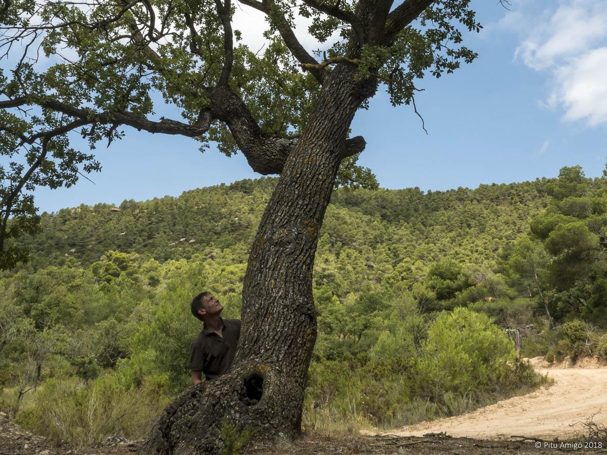Reboll de la Grevolosa, Quercus faginea valentianae, l'Espluga de Francolí. Arbres Singulars amb Pitu Amigó