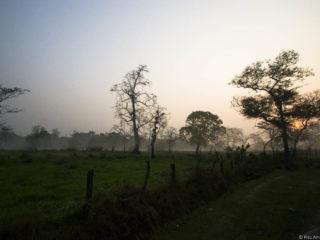 Jungles del Therai 2015 MVR-10