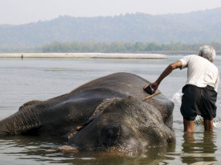 Banyant l'elefant. Jungles del Therai 2015 MVR