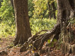 Jungles del Therai 2015 MVR-46
